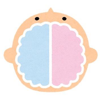脳イラスト.jpg