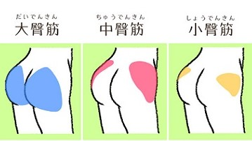 a小殿筋.jpg