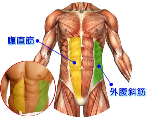 「腹筋 腹斜筋」の画像検索結果